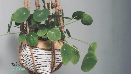 plante slow life au travail